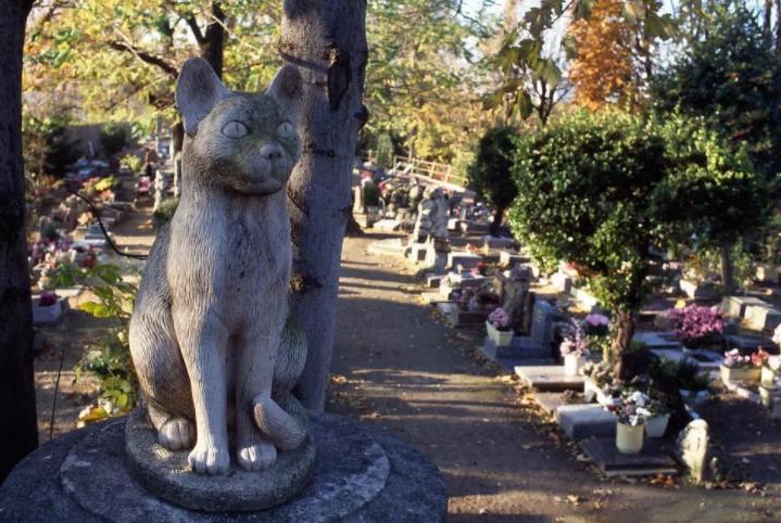 Кладбище собак в Париже